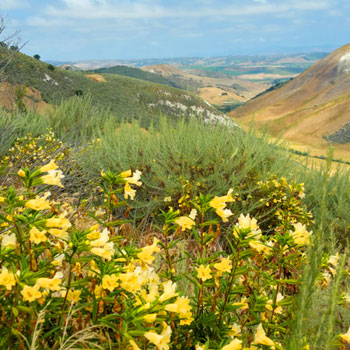 La Purisima Ranch Management Plan And Conservation Bank Establishment