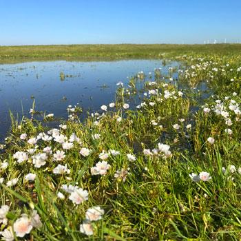 Montezuma Wetlands On-Site Mitigation Preserve