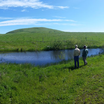 Sears Point Restoration and Habitat Management